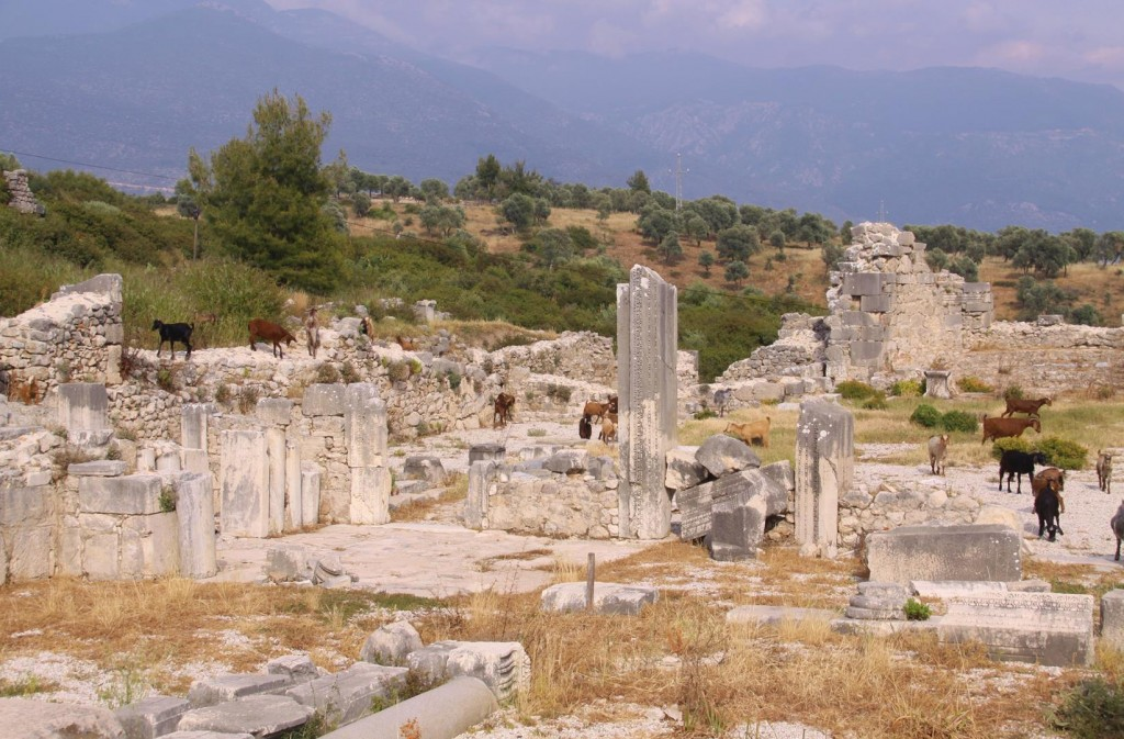 Goats have Overtaken Parts of the Old Site at Xanthos