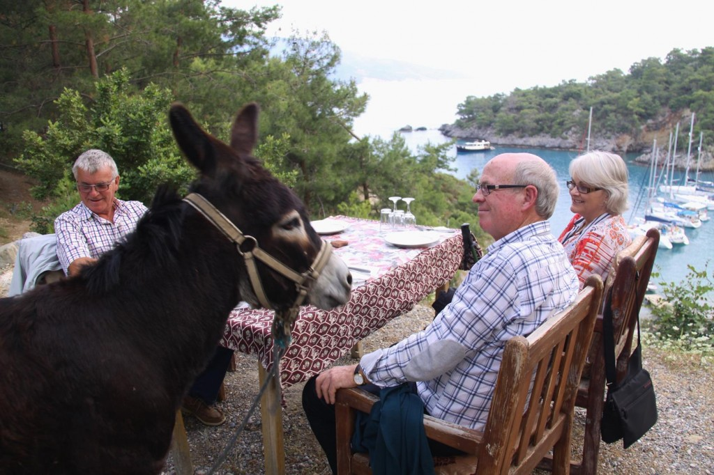 The Restaurant Owner's Donkey Takes a Liking to Our Friend, Nick