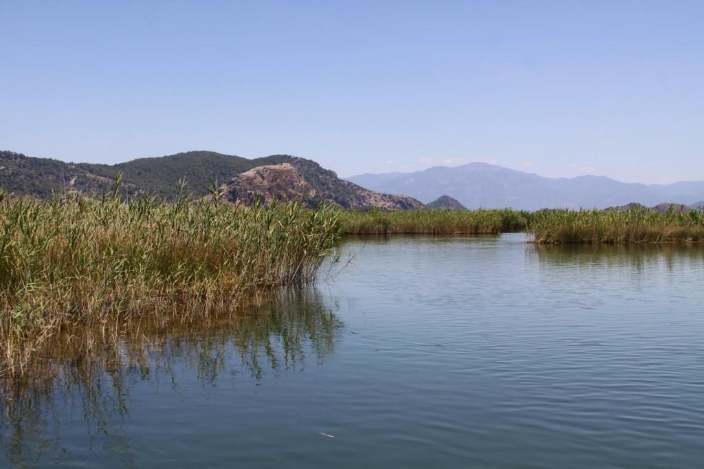 Our Trip takes us Through Narrow Reeded Waterways