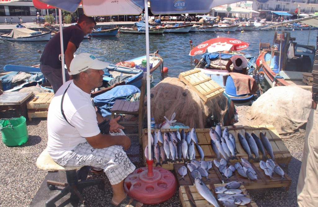 Fresh Fish is Sold by the Harbour