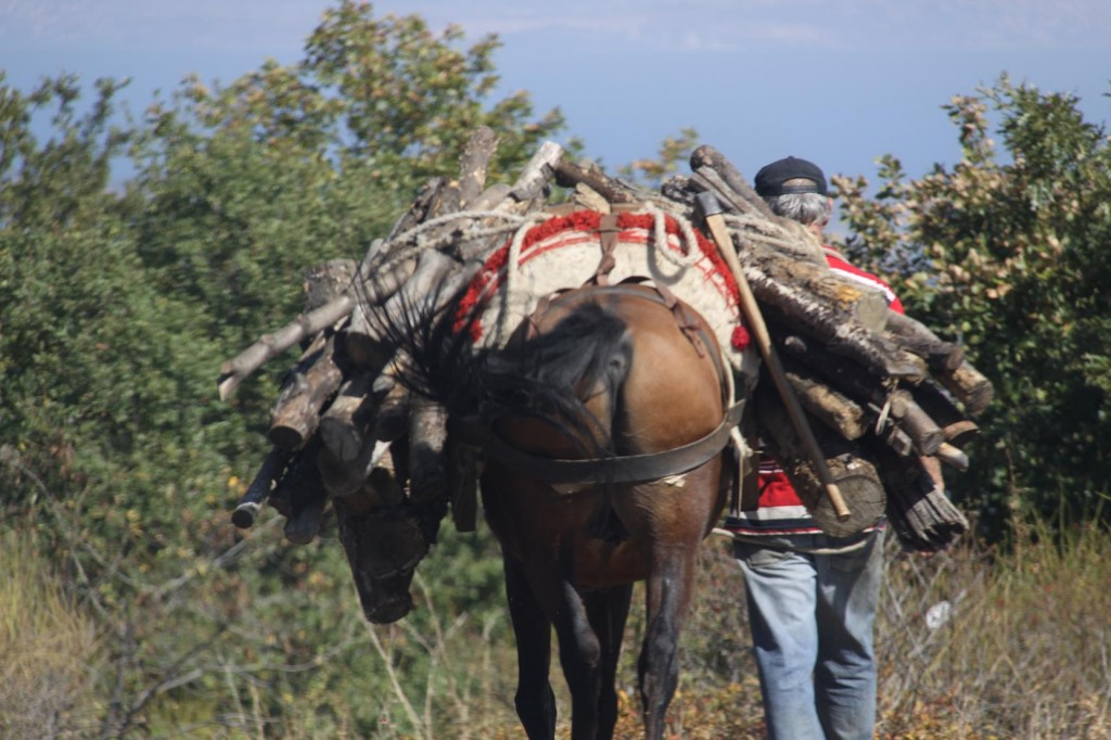 Horses and Donkeys are still used for Lugging Goods from Place to Place