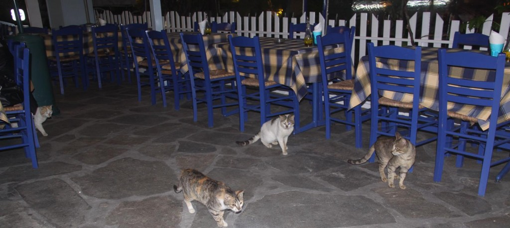 It wouldn't be Greece if there were no Cats at your Feet in the Tavernas !!