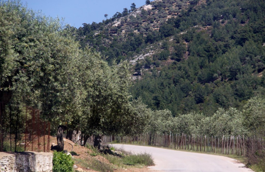 We Leave the Coast and Head Inland and Pass Thousands of Olive Trees