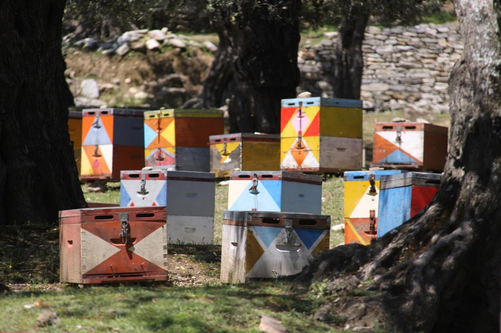 Beautifully Painted Bee Hives