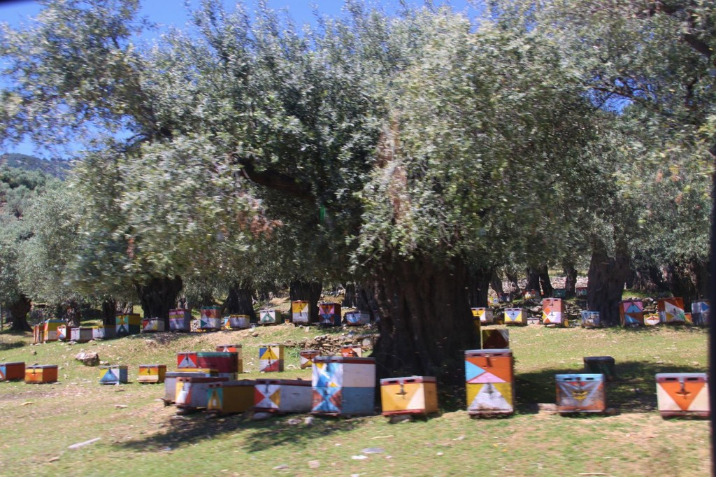 There were Thousands of Hives all Painted and Sheltered by Ancient Olive Trees