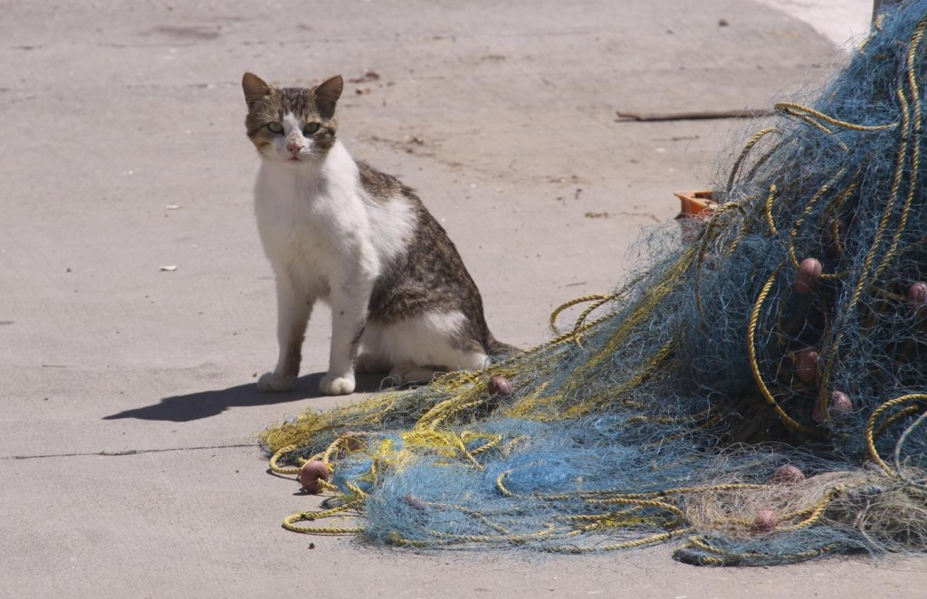 There were also Plenty of Felines Waiting by the Nets on the Quays
