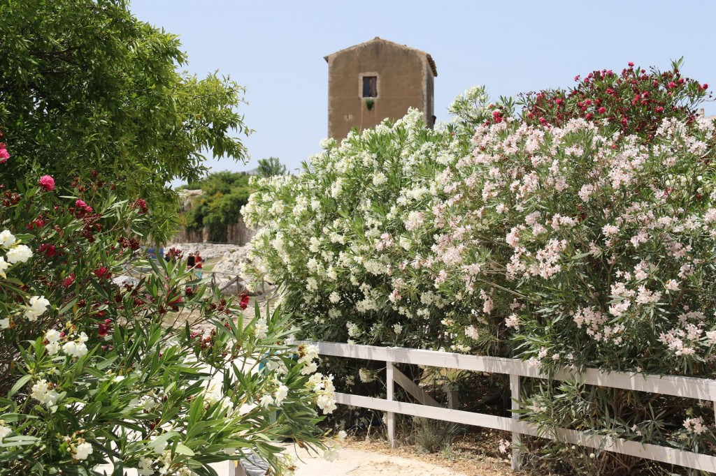 The colourful flowering bushes cover the hillside in this ancient area