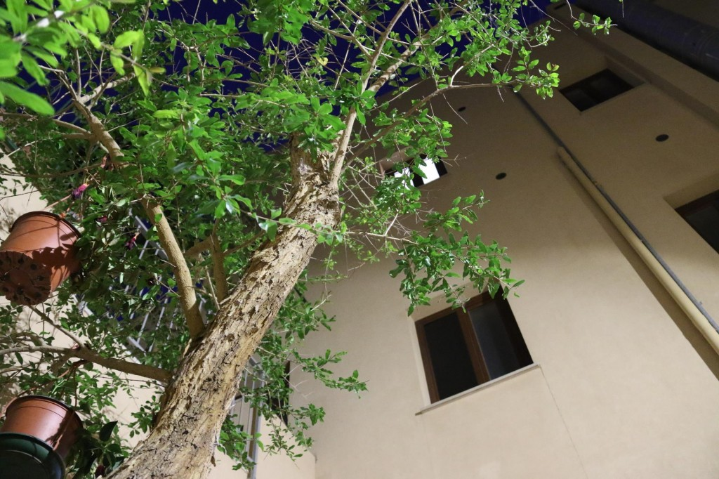 It was pleasant sitting under a tree in a courtyard surrounded by buildings