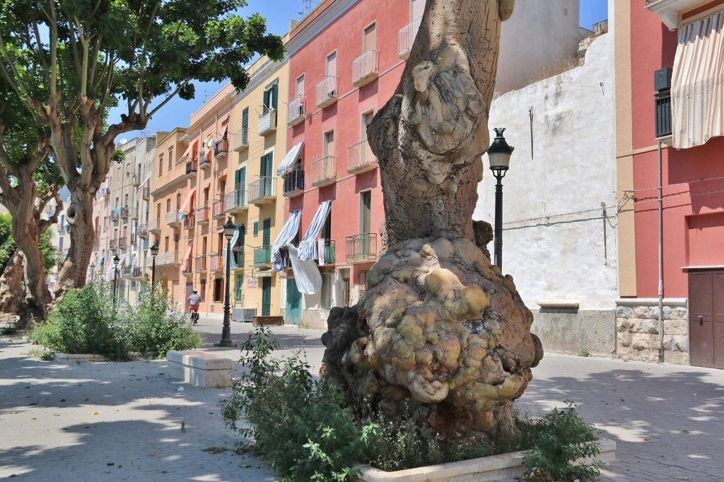A row of very ancient olive trees still survive in the city