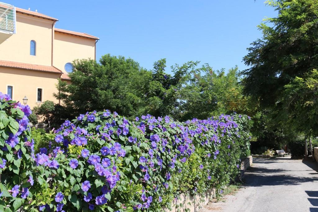 025 We pass lovely gardens