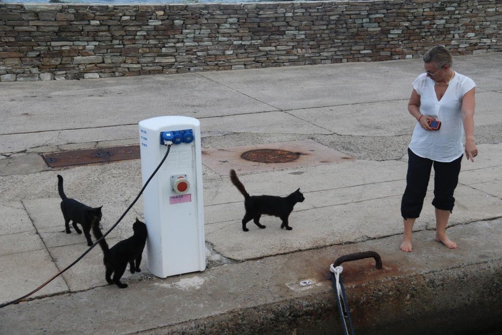 Kate who adores cats has already made a few friends