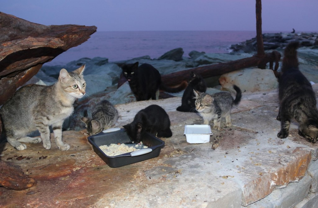 Further along the pier there was a large family of cats which were fed by the visiting sailors, including us!!