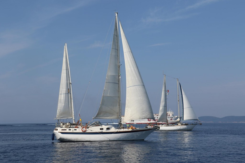 A group of yachts sailing up the coast was a wonderful sight