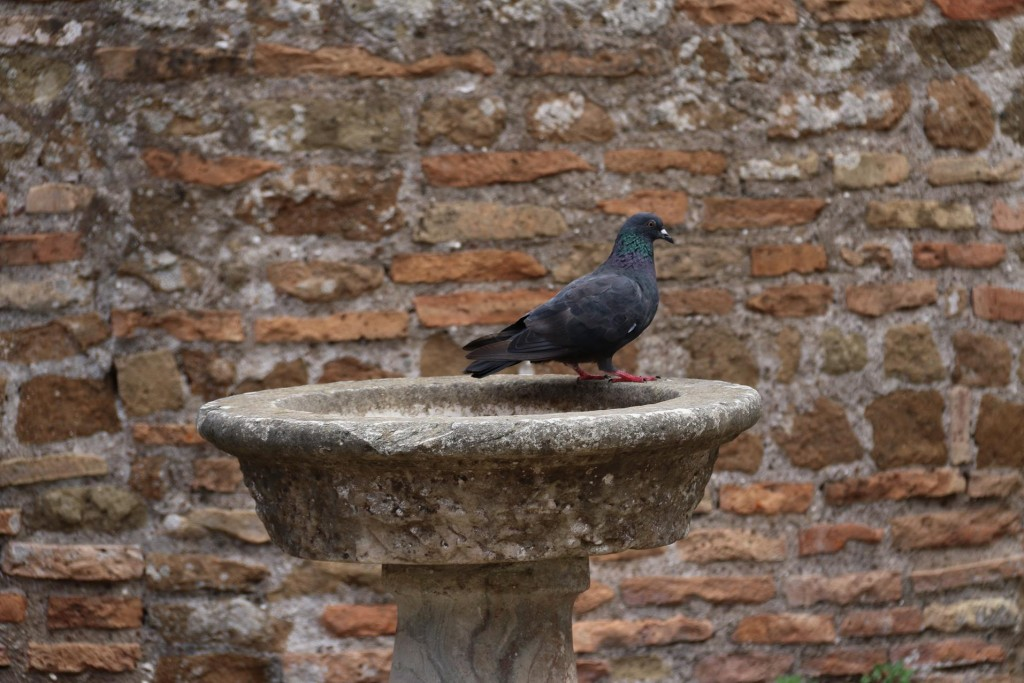 It was interesting seeing a  bird sitting in the old fountain