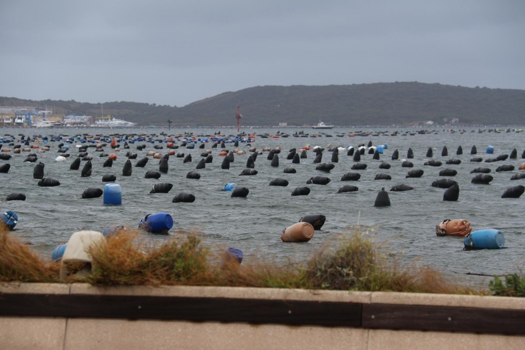 We are sure the mussels are feeling the wild weather conditions too