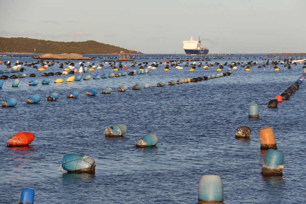 Another ferry makes it way past the mussel farms to Olbia Port