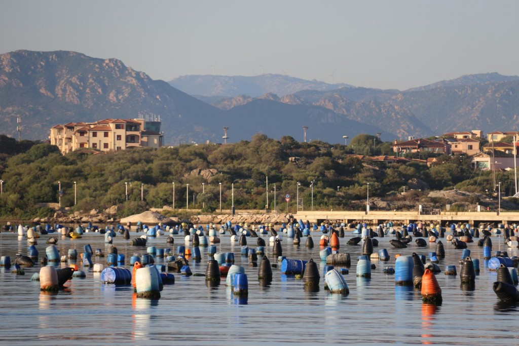 The mussel farms in the Olbian Gulf certainly dominate the bay