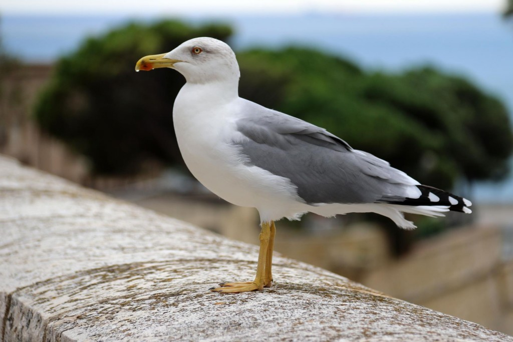 A friendly feathered bystander