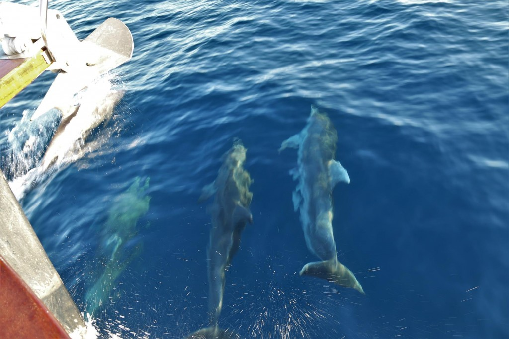 They swam with us for a few minutes before moving on to have breakfast