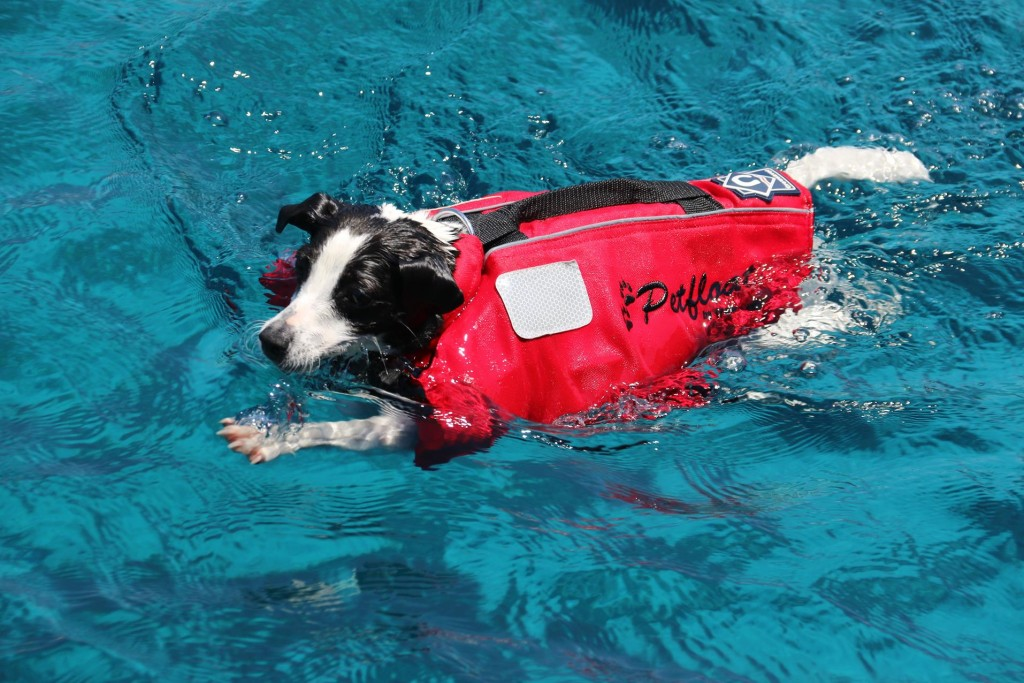 This lifejacketed pooch loved the water and was in and out of the water like an excited child