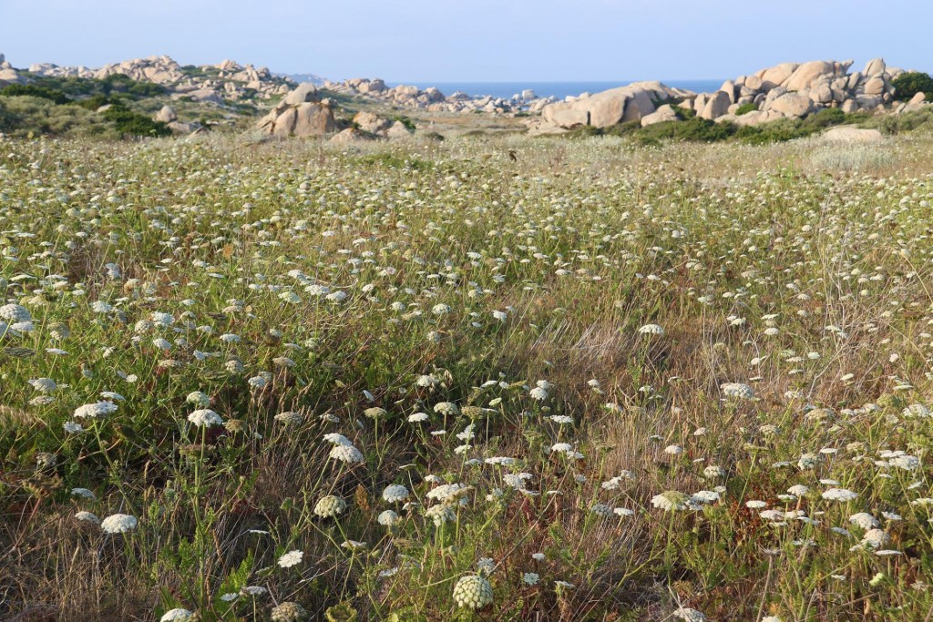 The island is presently covered in many different kinds of wildflowers