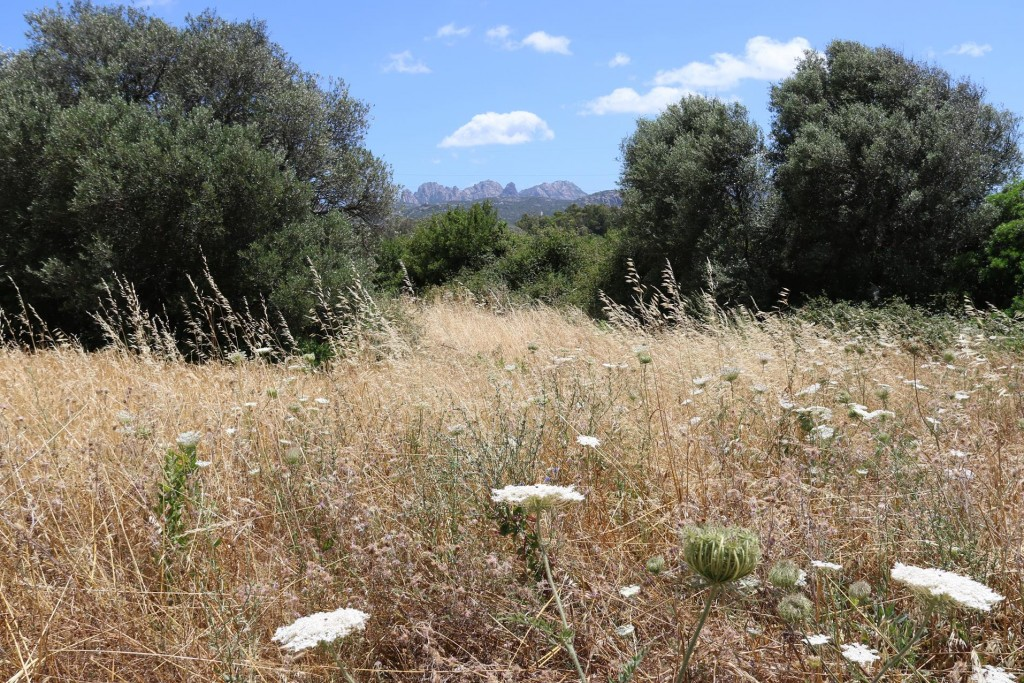 Around the sites there are fields of wildflowers old olive trees