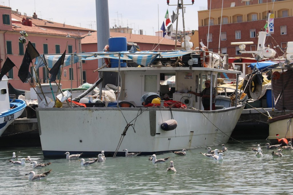 The fishermen have arrived back in port with their catches