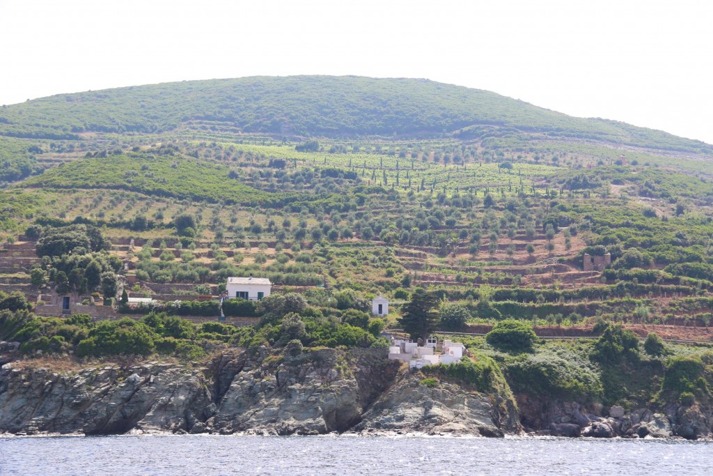 We pass a large wine growing area of Cap|Corse