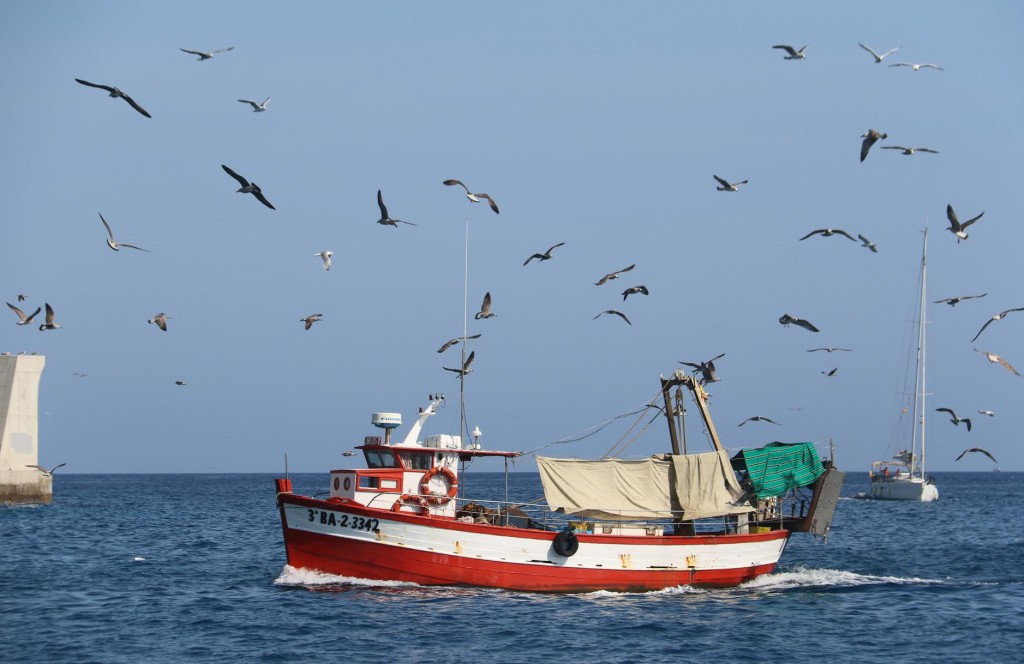 A small local fishing boat arriving back to port with a huge flock of seagulls waiting for some supper